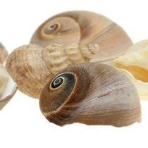 Seashell decoratie