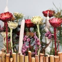 Compacta rozet rood (36) 40st