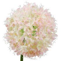 Allium creme-roze Ø15cm L70cm