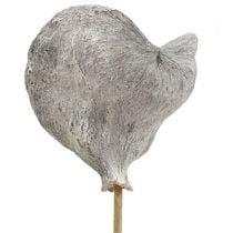 Badam op stok wit gewassen 12cm L55cm 23st