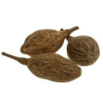 Baobab fruit geschild 15cm - 20cm naturel 5st