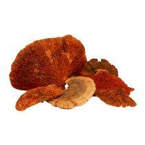 Boomspons oranje 1kg