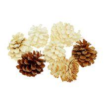 Bergdennenappels, klein, gebleekt 3,5-5cm 1kg