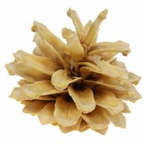 Bergdenappel Pinus mugo crème 2-5cm 1kg