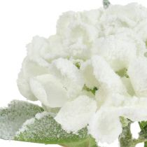 Hortensia wit gesneeuwd 33cm 4st