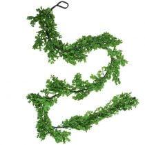 Buxus slinger groen 180cm