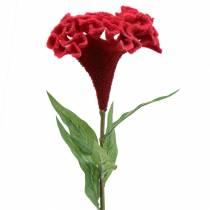 Celosia cristata hanekam rood 72cm