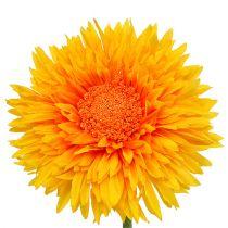 Chrysanthemum Teddy 63cm goudgeel