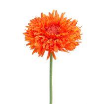 Chrysanthemum teddy 63cm oranje
