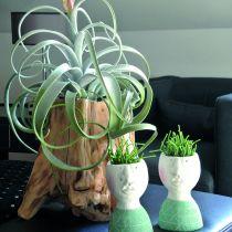 Sierpot wortel grijs 33cm x 29cm H30cm