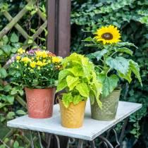 Decoratieve emmer fruit geel, oranje, groen gewassen Ø15cm H14cm set van 3