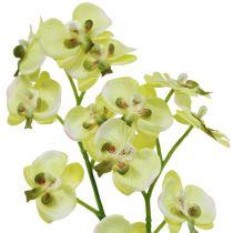 Mini orchidee lichtgroen met bol 30cm