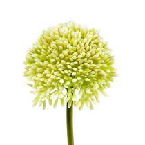 Decoratief Allium Crème Ø6,5cm L39cm