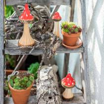 Decoratieve paddestoelen van hout rood, naturel 13,5 cm - 19 cm 3st