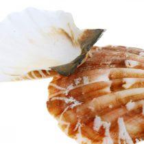 Decoratieve schelp wit, rood Echte schelp in een tafeldecoratie van raffianet 400g