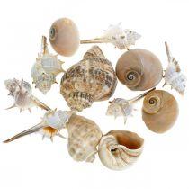 Decoratieve schelpen en slakkenhuizen leeg wit, natuurlijke decoratie maritiem 350g