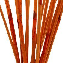 Decoratieve sticks Elephant Reed Orange 20st