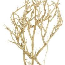 Dry Tree 500g gebleekt