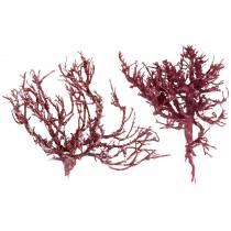 Dekoast koraaltak rood wit gewassen 500g