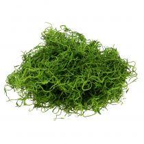 Jungle mos lente groen 250g