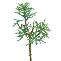 Echeveria 33cm lichtgroen
