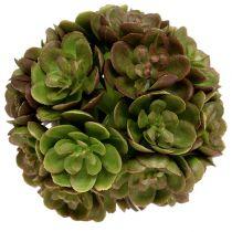 Echeveria bal 5cm groen 4st