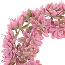 Echeveria krans roze Ø18cm 4st