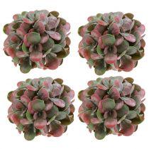 Echeveria ballen groen, rood Ø14cm 4st