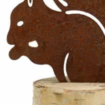 Eekhoorn roest op stam H22cm