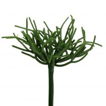 Euphorbia pick groen 19cm 4st