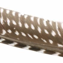 Natuurlijke veren 18 - 24cm 10g