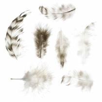 Natuurlijke veren 5,5 - 10 cm 10 g