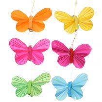 Veer vlinder op clip gekleurd 6cm 12st