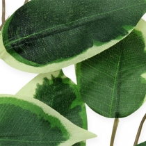Siertak Ficus tak 58cm