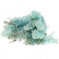 Decoratief mos lichtblauw aquamarijn rendiermos ambachtelijk mos 400g