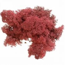Deko-Mos Rot Bordeaux Rendiermos voor decoratie en handwerk 500g