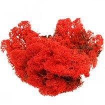 Decoratief mos rood rendiermos voor handwerk 400g
