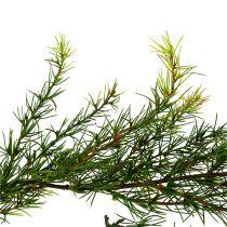 Slinger lariks groen L 200 cm