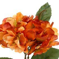 Hortensia oranje 30cm 3st
