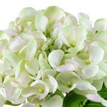 Hortensia witgroen 60cm