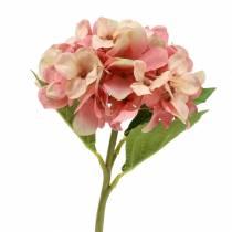 Hortensia beige / roze 35cm