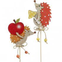 Bloemspeld egel, houten decoratie, herfstfiguur H9.5cm L32cm 12st