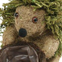 Egel met mand groen, herfstdecoratie voor opplant, decoratieve plantenmand H24cm Ø9,5cm