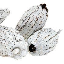 Cacaodoppen gewassen wit 15st