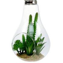 Cactussen in glas om 21cm op te hangen