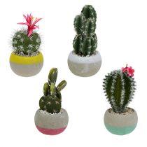 Cactussen in een potmix H13cm 4st
