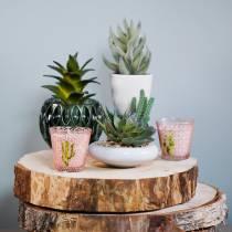 Cactussen in een pot Ø12cm 1stuk