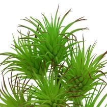 Cactustakken 20cm lichtgroen 3st