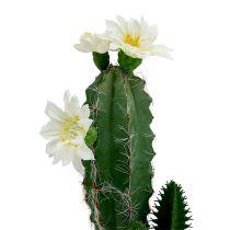 Cactus in een pot met bloem 21cm wit