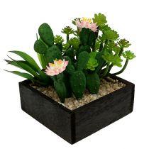 Cactus met bloem 14cm in een houten kist